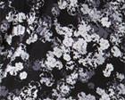 Texture Floral